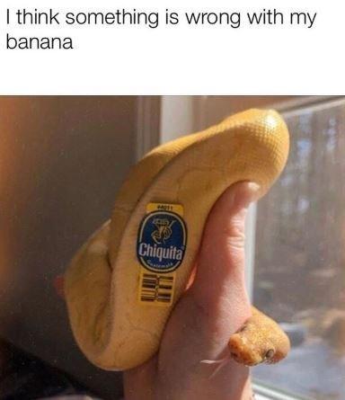 Bockwurst - I think something is wrong with my banana Chiquita