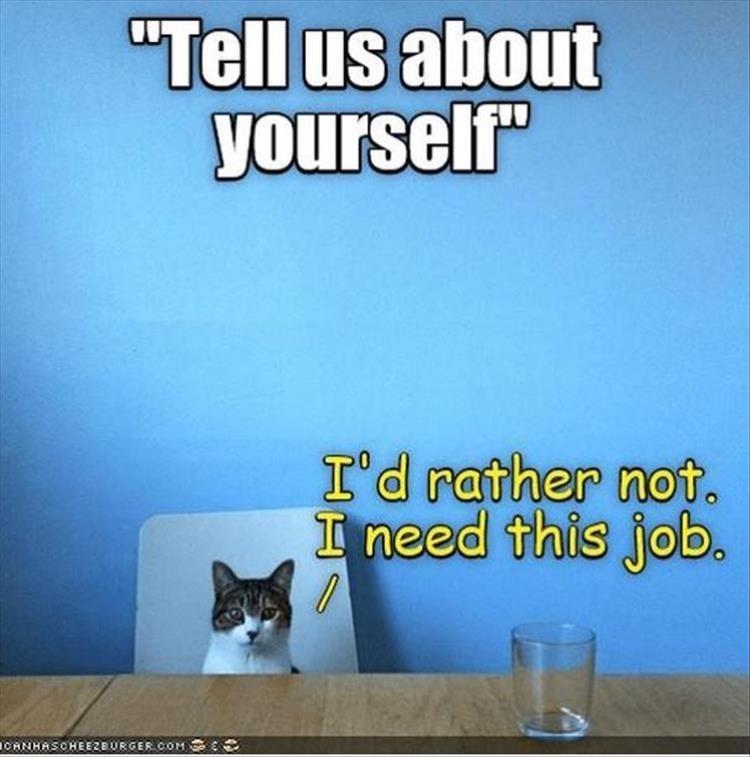 cat memes - 9381991936