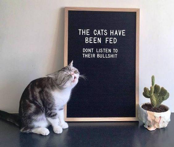 cat memes - 9381996800