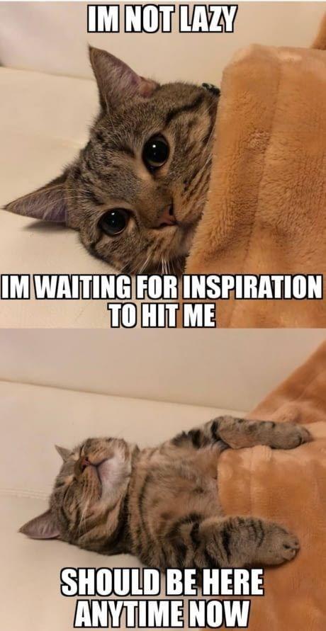 cat memes - 9381997056
