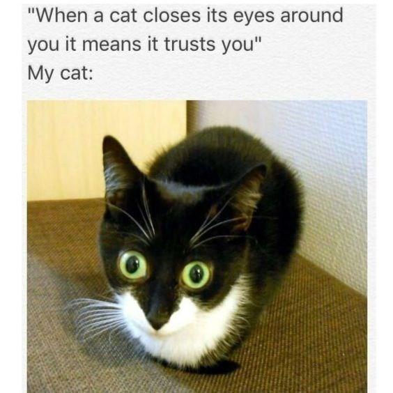 cat memes - 9381997568