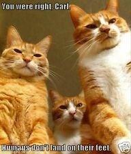 cat memes - 9381999616