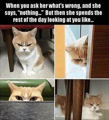 cat memes - 9382002176