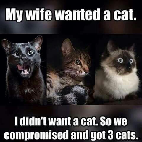 cat memes - 9382002944