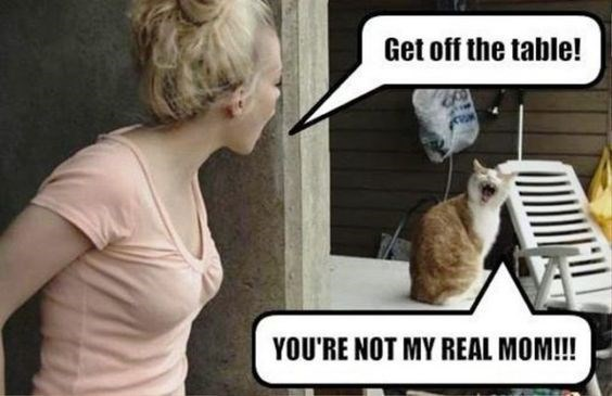 cat memes - 9382008064
