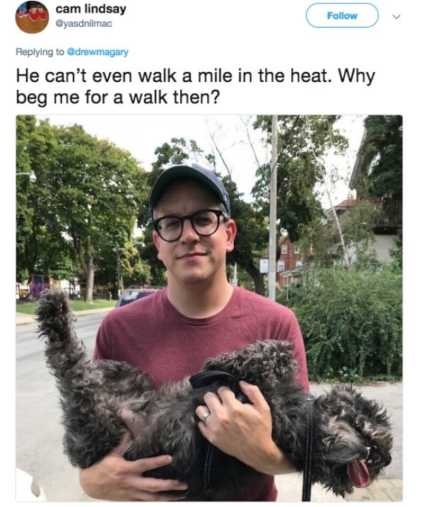 Dog - cam lindsay @yasdnilmac Follow Replying to @drewmagary He can't even walk a mile in the heat. Why beg me for a walk then?