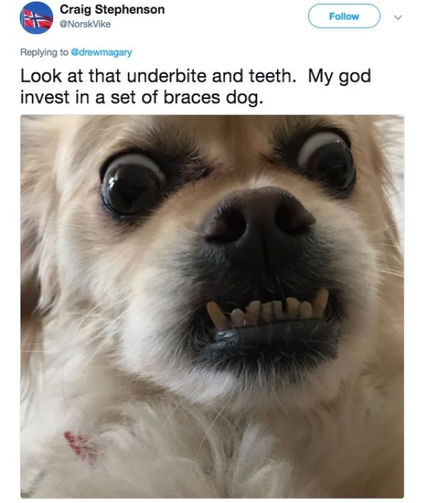 Dog - Craig Stephenson Follow @NorskVike Replying to @drewmagary Look at that underbite and teeth. My god invest in a set of braces dog.