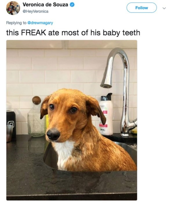 Dog - Veronica de Souza Follow @HeyVeronica Replying to @drewmagary this FREAK ate most of his baby teeth