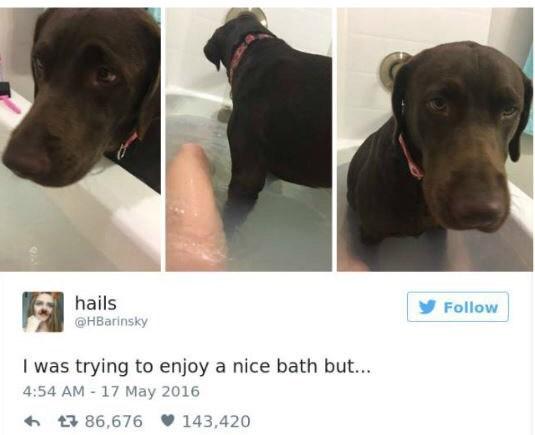 Dog - hails Follow @HBarinsky I was trying to enjoy a nice bath but... 4:54 AM - 17 May 2016 86,676 143,420