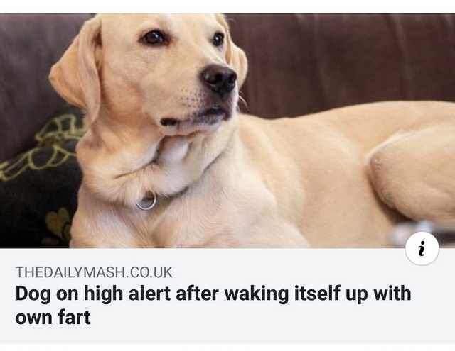 Dog - i THEDAILYMASH.CO.UK high alert after waking itself up with Dog on Own fart