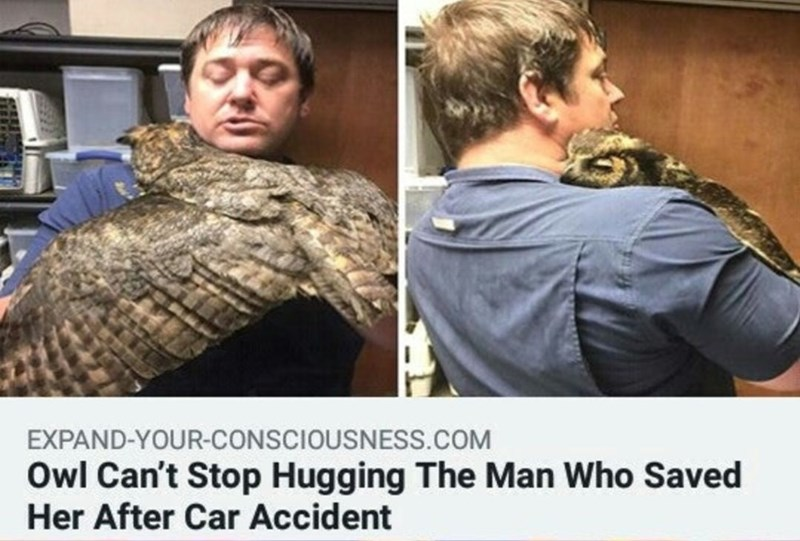 Reptile - EXPAND-YOUR-CONSCIOUSNESS.cOM Owl Can't Stop Hugging The Man Who Saved Her After Car Accident