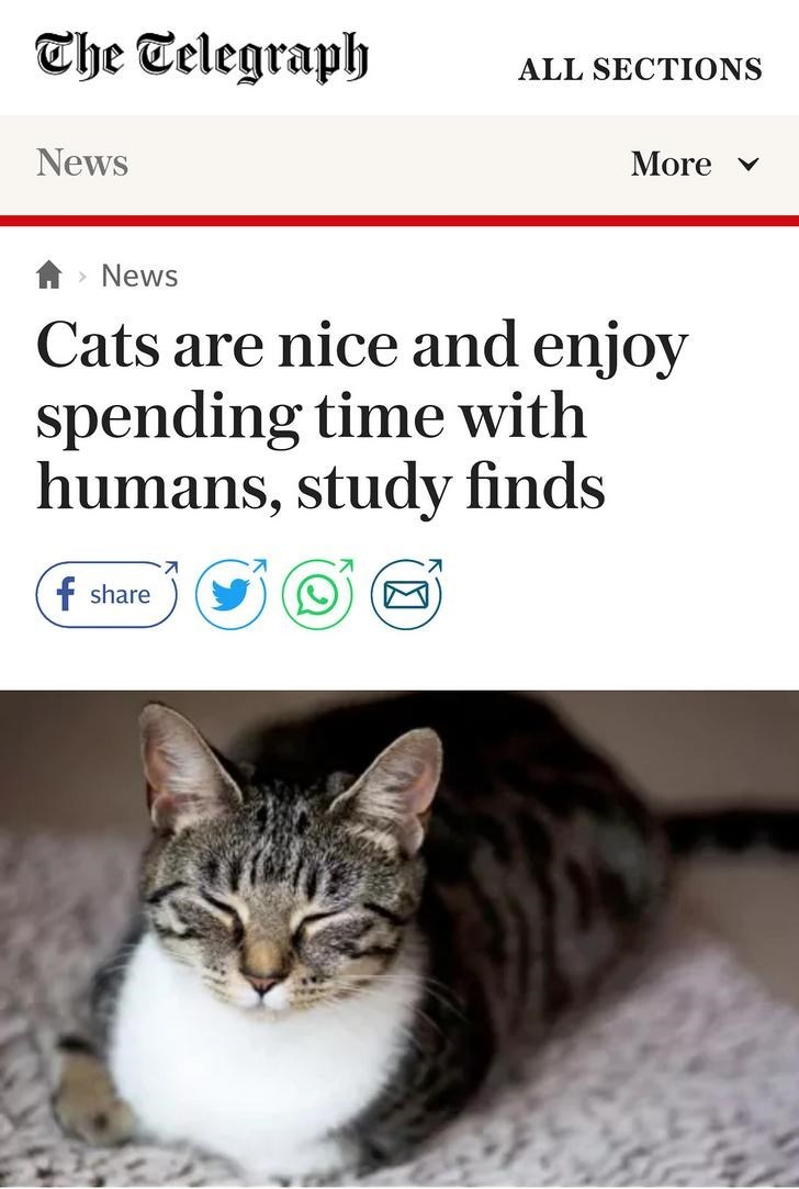 Cat - Che Telegraph ALL SECTIONS News More News Cats are nice and enjoy spending time with humans, study finds f share
