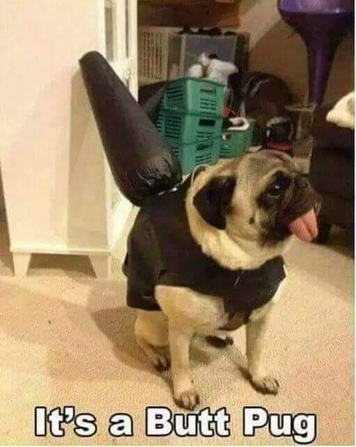 Dog - It's a Butt Pug
