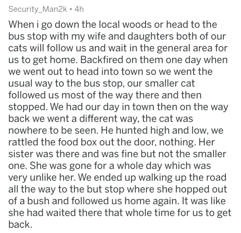 Text - Security_Man2k 4h When i go down the local woods or head to the bus stop with my wife and daughters both of our cats will follow us and wait in the general area for us to get home. Backfired on them one day when we went out to head into town so we went the usual way to the bus stop, our smaller cat followed us most of the way there and then stopped. We had our day in town then on the way back we went a different way, the cat was nowhere to be seen. He hunted high and low, we rattled the f