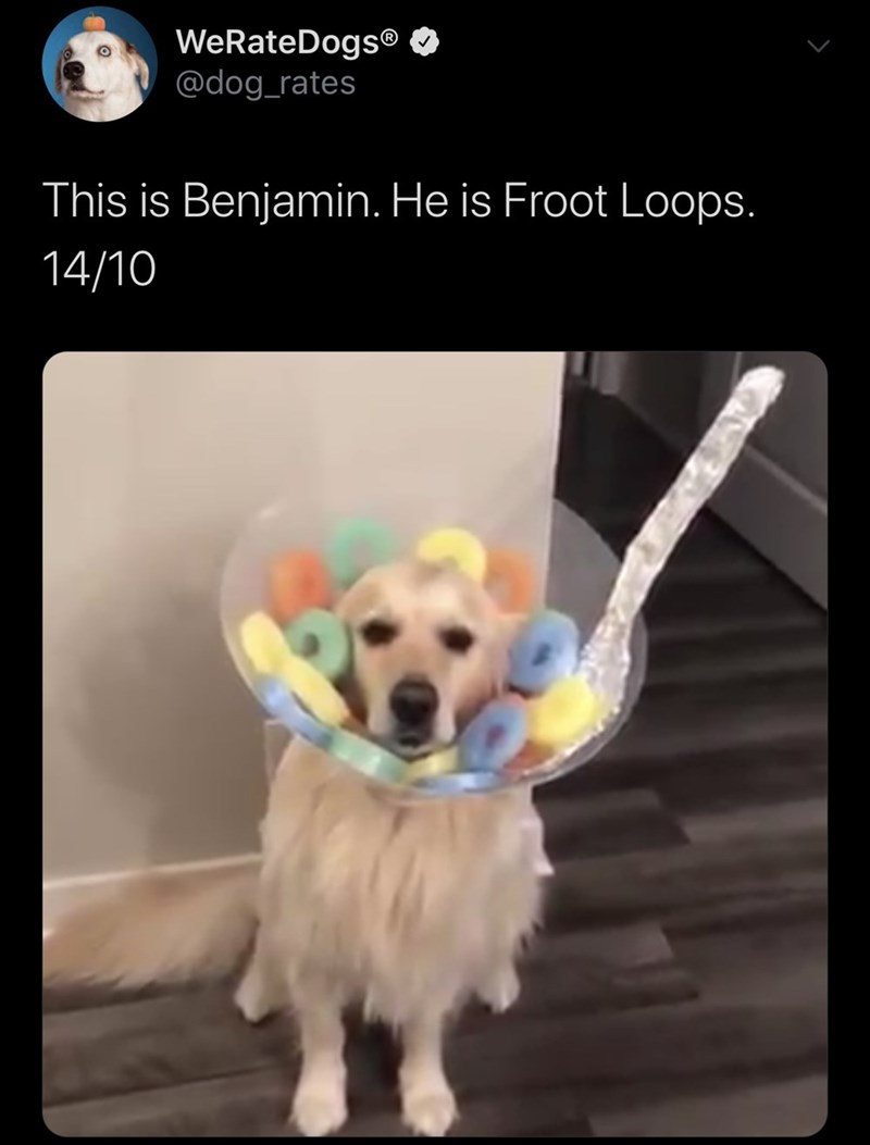 Dog - WeRateDogs® @dog_rates This is Benjamin. He is Froot Loops. 14/10