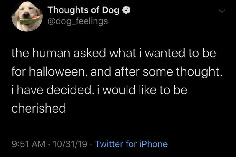 Text - Thoughts of Dog @dog_feelings the human asked what i wanted to be for halloween. and after some thought. i have decided. i would like to be cherished 9:51 AM 10/31/19 Twitter for iPhone