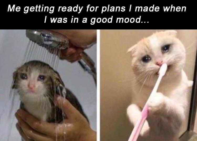 cat memes - 9382952192