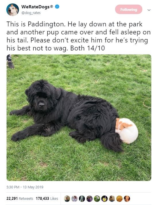 Dog breed - WeRateDogs Following @dog rates This is Paddington. He lay down at the park and another pup came over and fell asleep on his tail. Please don't excite him for he's trying his best not to wag. Both 14/10 5:30 PM 13 May 2019 22,291 Retweets 178,433 Likes