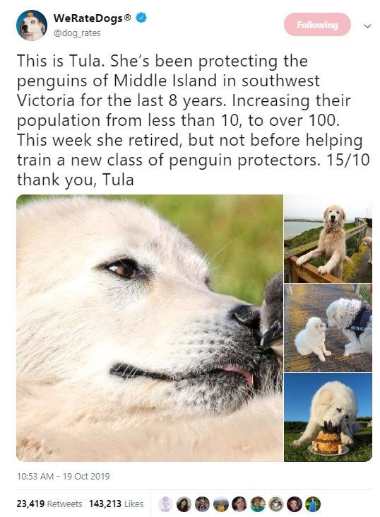 Canidae - WeRateDogs Following @dog rates This is Tula. She's been protecting the penguins of Middle Island in southwest Victoria for the last 8 years. Increasing their population from less than 10, to over 100. This week she retired, but not before helping train a new class of penguin protectors. 15/10 thank you, Tula 10:53 AM 19 Oct 2019 23,419 Retweets 143,213 Likes