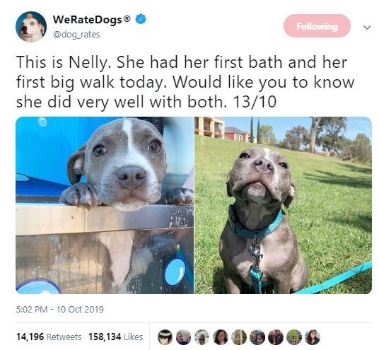 Weimaraner - WeRateDogs Following @dog rates This is Nelly. She had her first bath and her first big walk today. Would like you to know she did very well with both. 13/10 5:02 PM 10 Oct 2019 14,196 Retweets 158,134 Likes