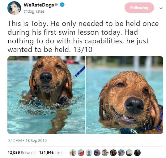 Dog - WeRateDogs Following @dog rates This is Toby. He only needed to be held once during his first swim lesson today. Had nothing to do with his capabilities, he just wanted to be held. 13/10 9:42 AM 18 Sep 2019 12,059 Retweets 131,946 Likes