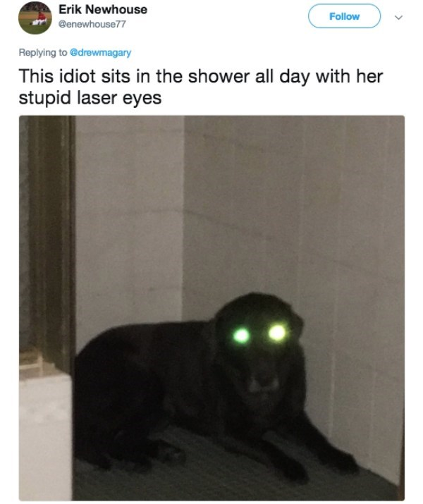 Text - Erik Newhouse Follow @enewhouse77 Replying to @drewmagary This idiot sits in the shower all day with her stupid laser eyes