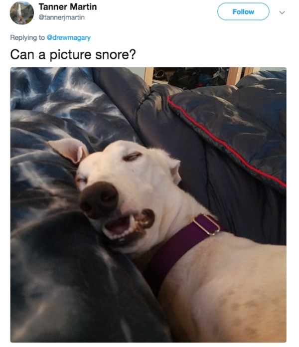 Canidae - Tanner Martin Follow @tannerjmartin Replying to @drewmagary Can a picture snore?