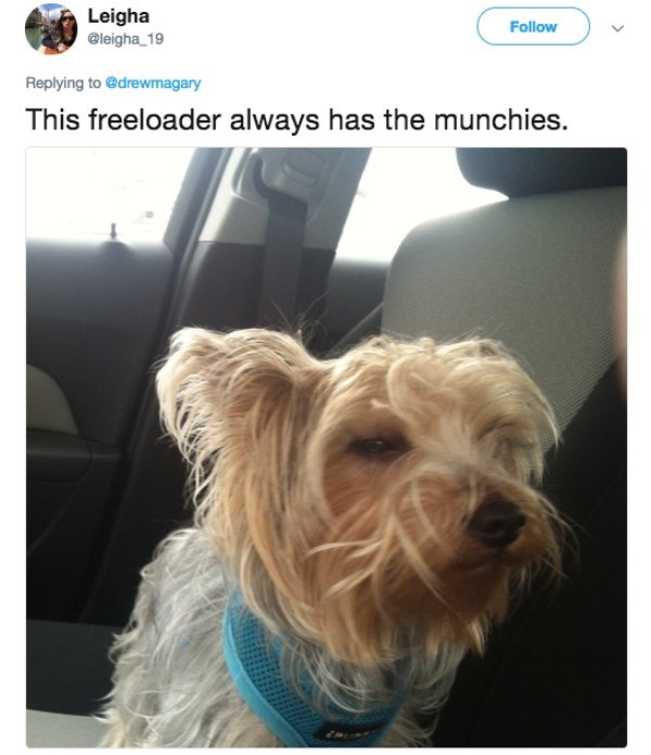 Dog - Leigha @leigha 19 Follow Replying to @drewmagary This freeloader always has the munchies.