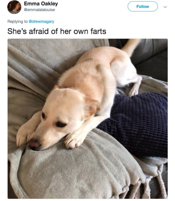 Dog breed - Emma Oakley Follow @emmalalalouise Replying to @drewmagary She's afraid of her own farts