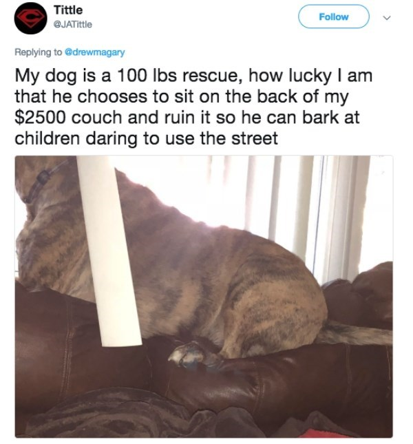 Text - Tittle Follow @JATittle Replying to @drewmagary My dog is a 100 lbs rescue, how lucky I am that he chooses to sit on the back of my $2500 couch and ruin it so he can bark at children daring to use the street