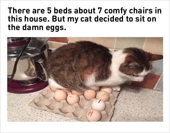 funny cat memes - 9383073536