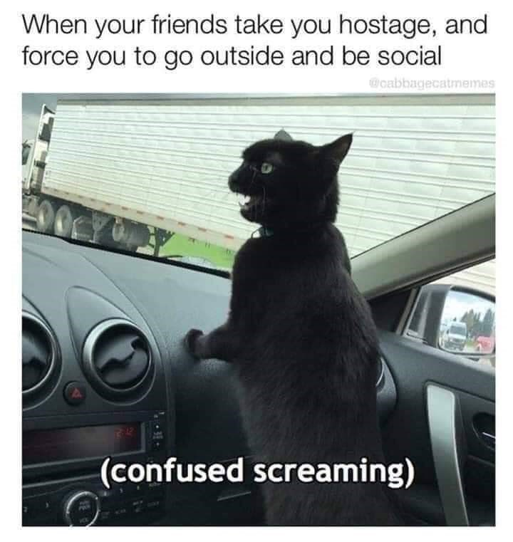 Cat - When your friends take you hostage, and force you to go outside and be social cabbagecatmemes (confused screaming)
