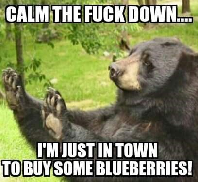 Bear - CALM THE FUCK DOWN.. I'MJUST IN TOWN TOBUYSOME BLUEBERRIES!