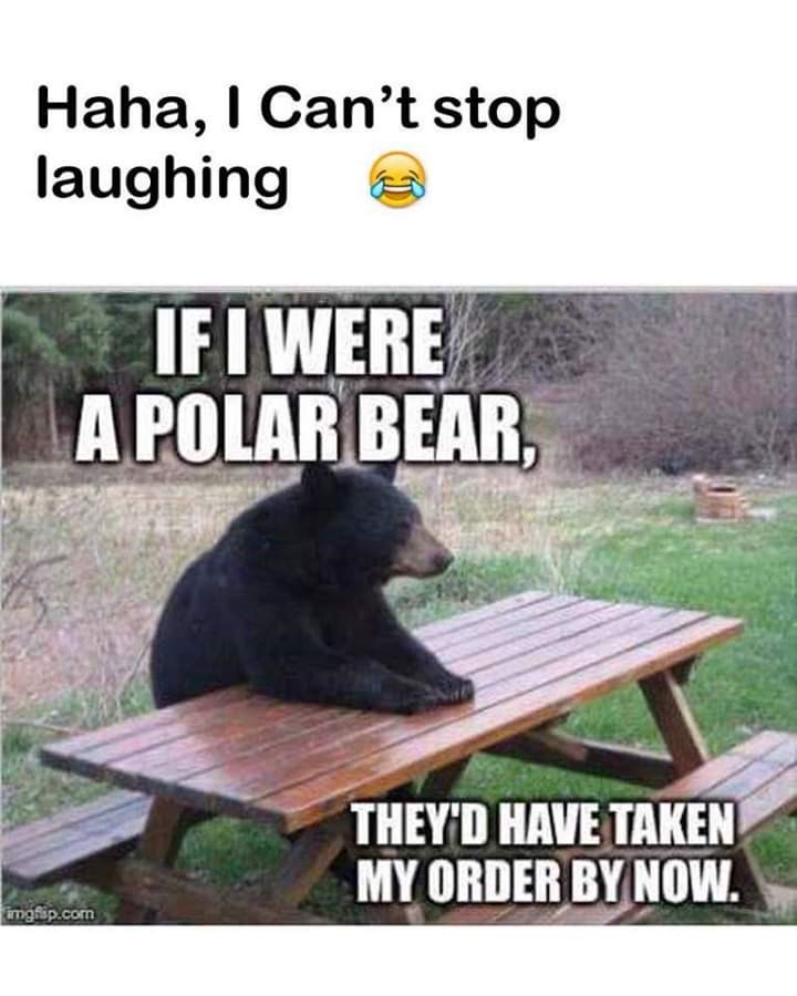 Table - Haha, I Can't stop laughing IFI WERE A POLAR BEAR, THEY D HAVE TAKEN MY ORDER BY NOW imgflip.com