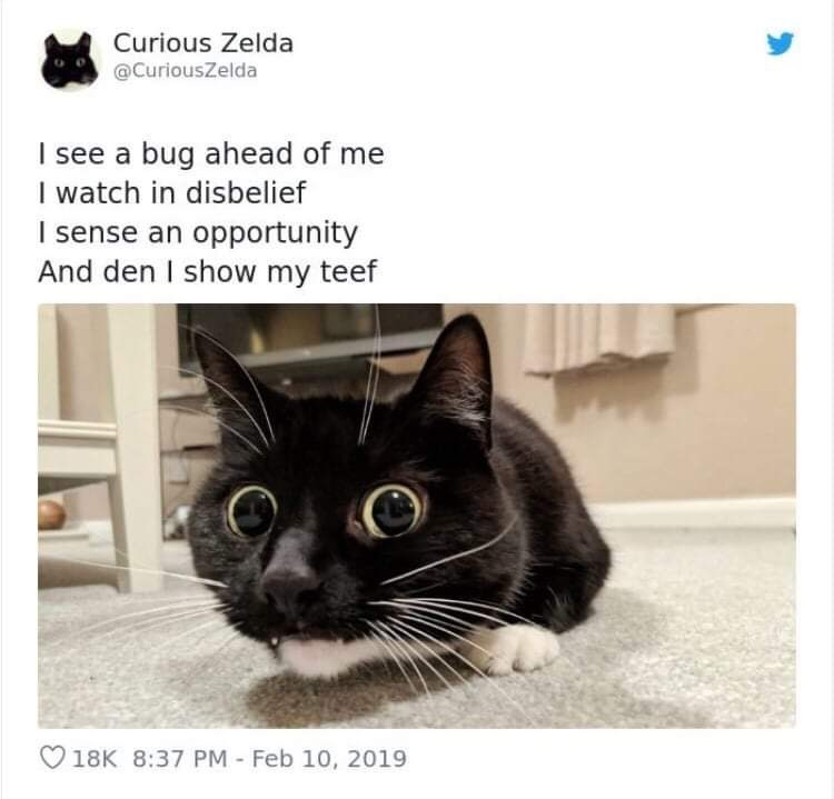 Cat - Curious Zelda @CuriousZelda I see a bug ahead of me I watch in disbelief I sense an opportunity And den I show my teef 18K 8:37 PM - Feb 10, 2019