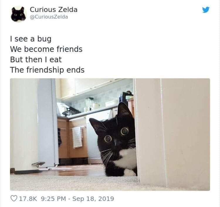 Cat - Curious Zelda @CuriousZelda I see a bug We become friends But then I eat The friendship ends V17.8K 9:25 PM-Sep 18, 2019