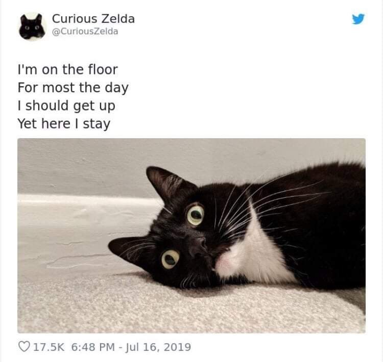 Cat - Curious Zelda @CuriousZelda I'm on the floor For most the day I should get up Yet here I stay 17.5K 6:48 PM - Jul 16, 2019