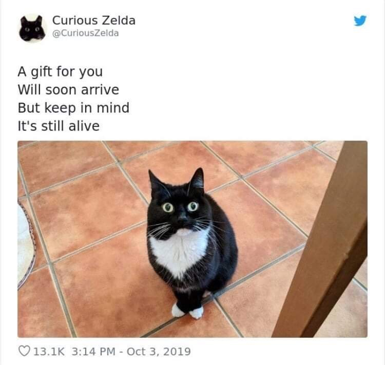 Cat - Curious Zelda @CuriousZelda A gift for you Will soon arrive But keep in mind It's still alive 13.1K 3:14 PM Oct 3, 2019