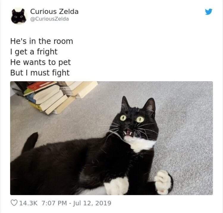 Cat - Curious Zelda @CuriousZelda He's in the room I get a fright He wants to pet But I must fight 14.3K 7:07 PM - Jul 12, 2019