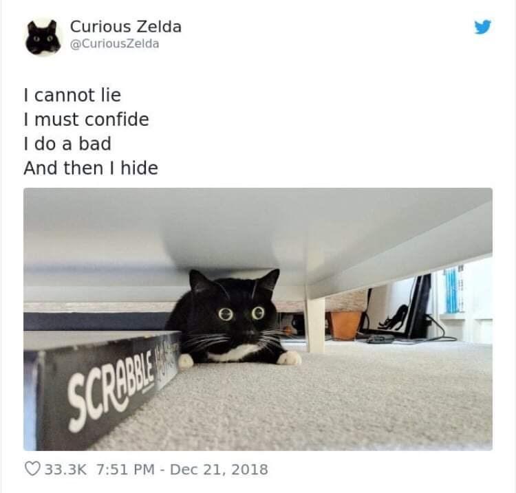 Cat - Curious Zelda @CuriousZelda I cannot lie I must confide I do a bad And then I hide SCREI 33.3K 7:51 PM- Dec 21, 2018