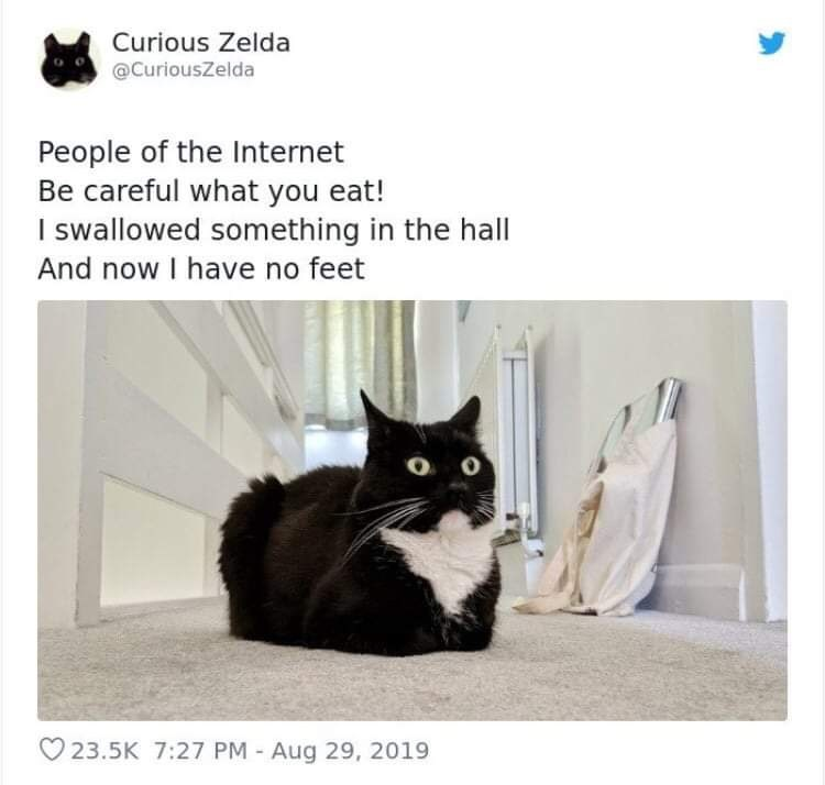 Cat - Curious Zelda @CuriousZelda People of the Internet Be careful what you eat! I swallowed something in the hall And now I have no feet 23.5K 7:27 PM Aug 29, 2019