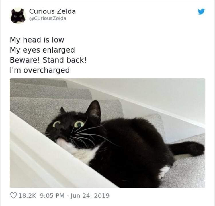 Cat - Curious Zelda @CuriousZelda My head is low My eyes enlarged Beware! Stand back! I'm overcharged V18.2K 9:05 PM - Jun 24, 2019