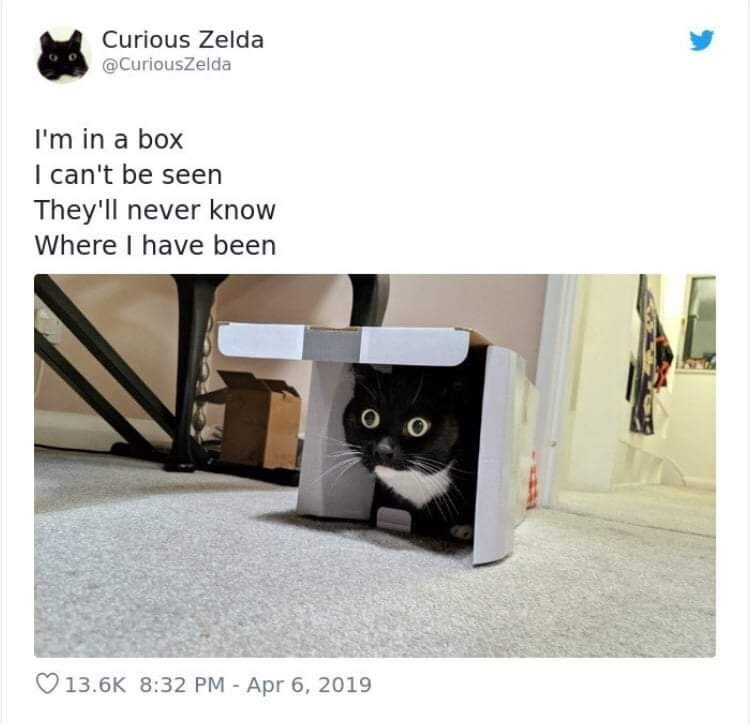 Cat - Curious Zelda @CuriousZelda I'm in a box I can't be seen They'll never know Where I have been 13.6K 8:32 PM -Apr 6, 2019