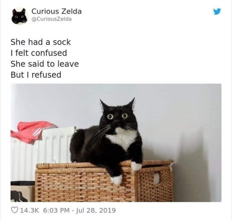 Cat - Curious Zelda @CuriousZelda She had a sock I felt confused She said to leave But I refused 14.3K 6:03 PM - Jul 28, 2019