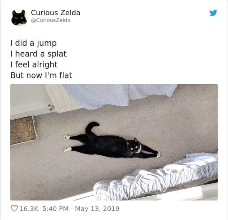 Black cat - Curious Zelda @CuriousZelda I did a jump I heard a splat I feel alright But now I'm flat 16.3K 5:40 PM - May 13, 2019