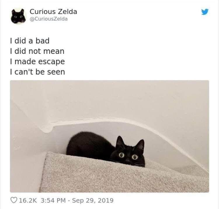 Cat - Curious Zelda @CuriousZelda I did a bad I did not mean I made escape I can't be seen V16.2K 3:54 PM Sep 29, 2019