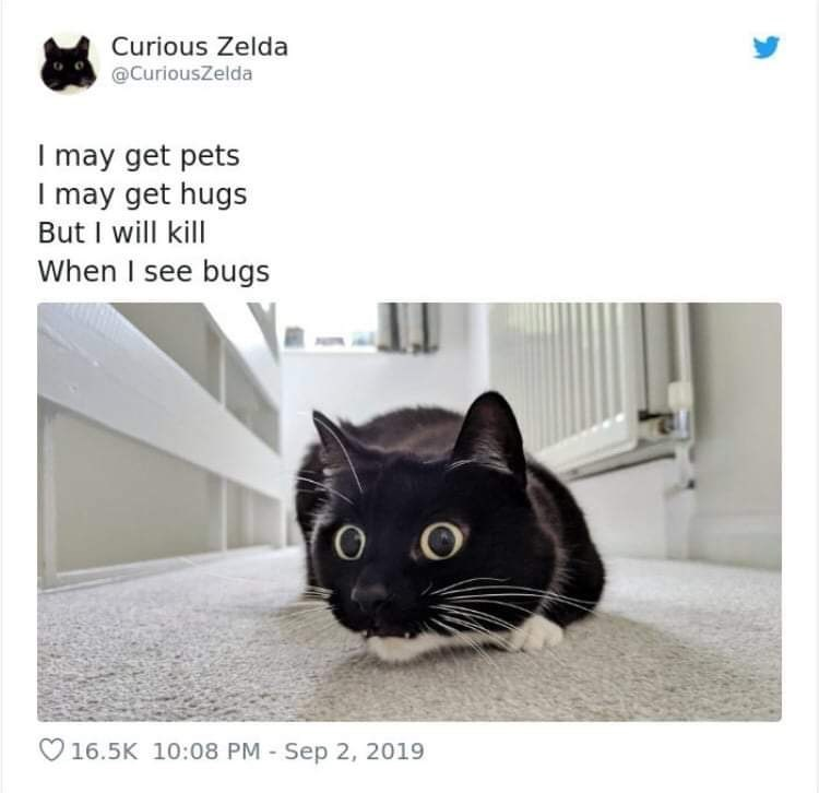 Cat - Curious Zelda @CuriousZelda may get pets I may get hugs But I will kill When I see bugs 16.5K 10:08 PM Sep 2, 2019