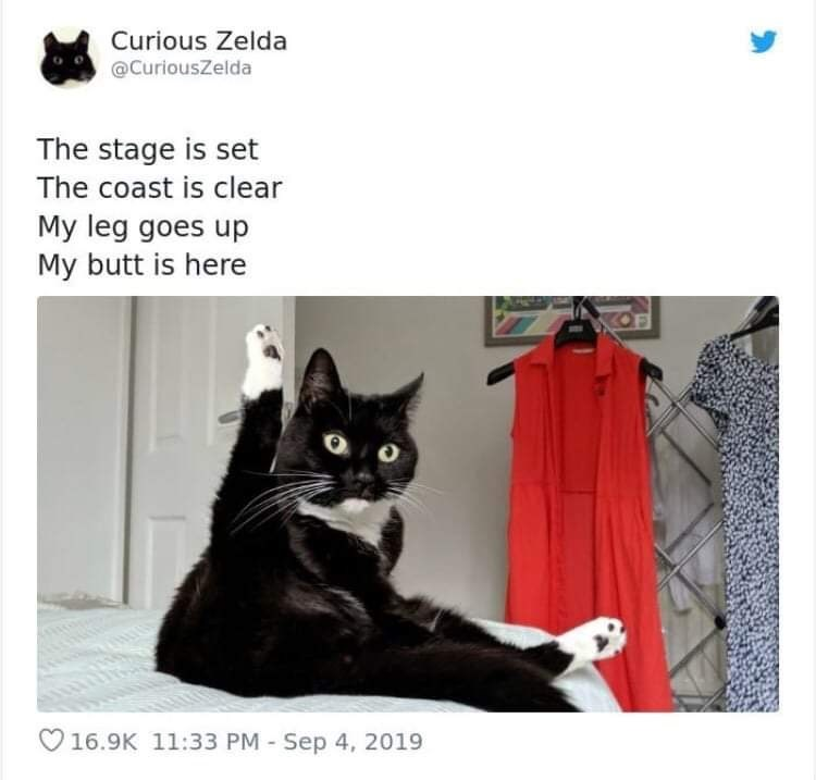 Cat - Curious Zelda @CuriousZelda The stage is set The coast is clear My leg goes up My butt is here OF 16.9K 11:33 PM -Sep 4, 2019