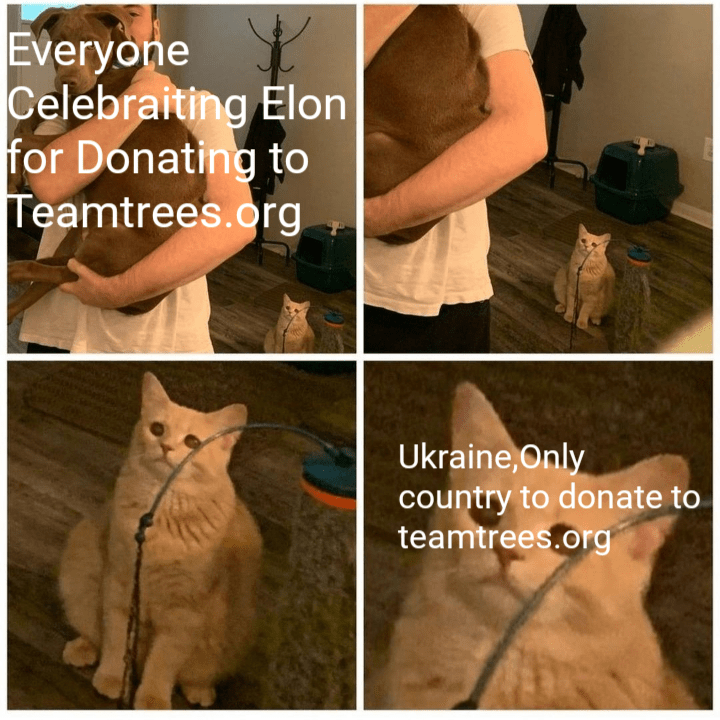 Cat - Everyone Celebraiting Elon for Donating to Teamtrees.org Ukraine,Only country to donate to teamtrees.org