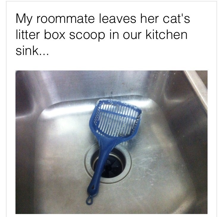 Text - My roommate leaves her cat's litter box scoop in our kitchen sink...